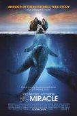 Все любят китов